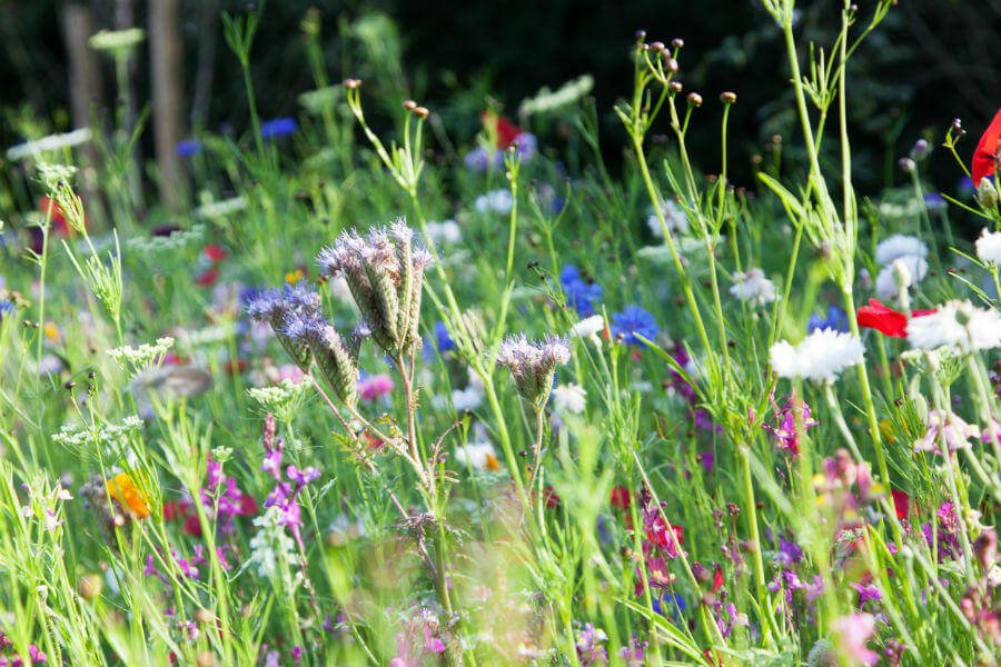 Shop Garden - Meadow Flowers